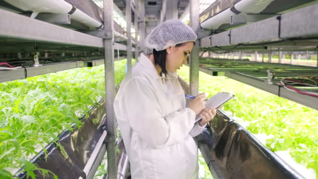 Female Sustainability Specialist Noting Indoor Crop Growth