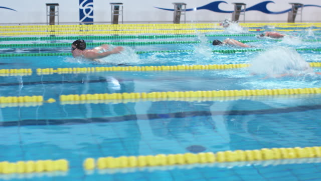 ts female swimmers competing in butterfly style competition - butterfly stroke stock videos and b-roll footage