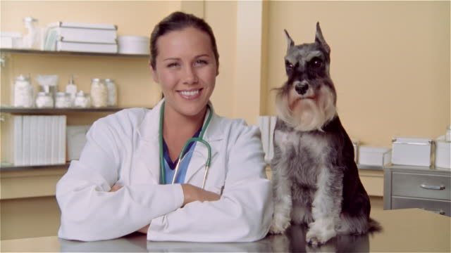 cu, female veterinarian and miniature schnauzer on examination table, portrait - examination table stock videos & royalty-free footage