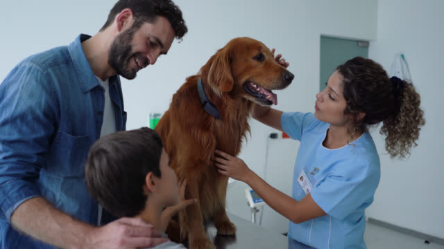 female veterinarian checking a golden retriever while male owner and son are standing next to them smiling and talking - animal hospital stock videos & royalty-free footage