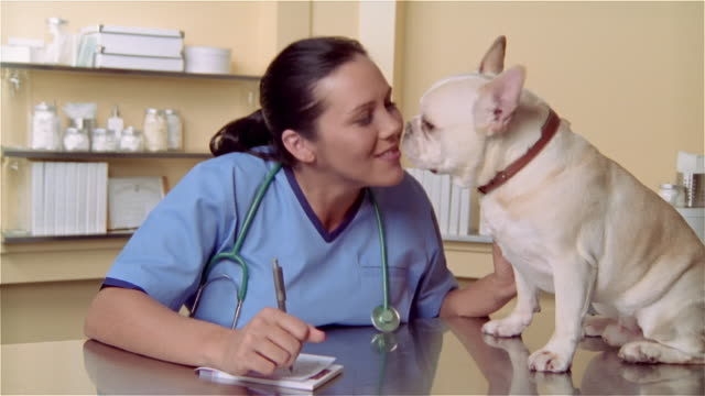 cu, female veterinarian writing prescription, french bulldog sitting on examination table - examination table stock videos & royalty-free footage