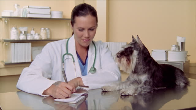 cu, female veterinarian writing prescription, miniature schnauzer lying on examination table - examination table stock videos & royalty-free footage