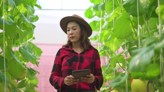 Female worker holding digital tablet in hand examining the muskmelon plants