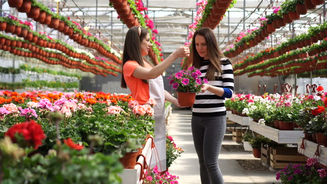 female worker in a greenhouse shows flowers to a customer - bunches stock videos & royalty-free footage