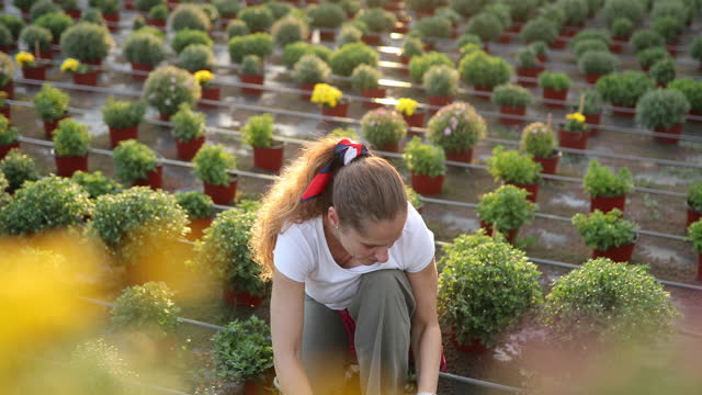 female worker planting flowers - plant bulb stock videos & royalty-free footage