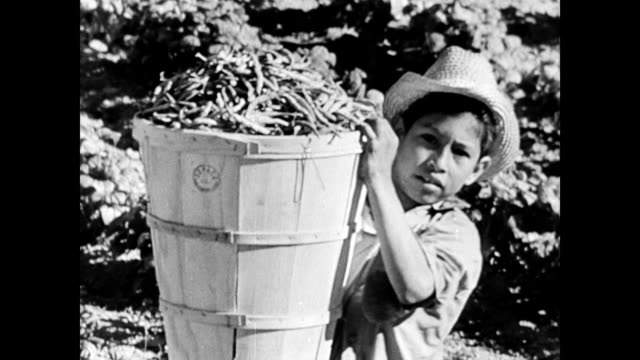 female worker pulling carrots / mexican migrants mostly children work the vegetable field / women sorting vegetables / hundreds of workers in a field... - dust bowl stock videos and b-roll footage