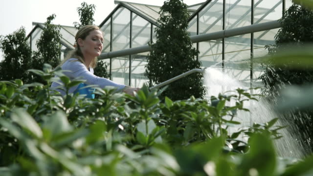 female worker watering plants - one mid adult woman only stock videos & royalty-free footage