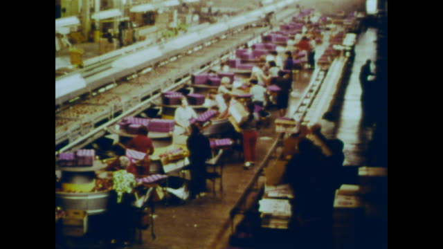 1966 female workers packaging fruit in factory - food processing plant stock videos & royalty-free footage