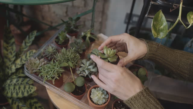 female working in plant shop arranging retail display with potted plants - pot plant stock videos & royalty-free footage
