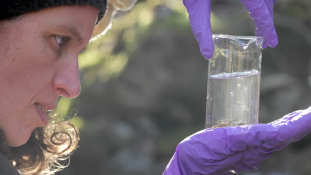 female zoologist examining crayfish from a stream - zoology stock videos & royalty-free footage