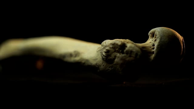 cu femur bone on turn table/ muldersdrift/ south africa - human bone stock videos & royalty-free footage