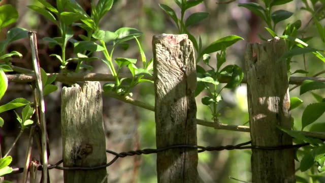 fence and vines - weathered stock videos and b-roll footage