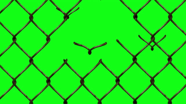 fence braking in to birds and birds fly a way - fence stock videos & royalty-free footage