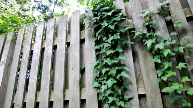 vidéos et rushes de barrière dans la forêt-audio - poteau en bois