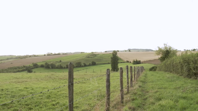 WS Fence running along pasture / Beaune, Burgundy, France
