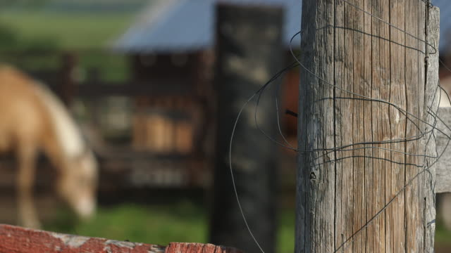 fencepost with steel wire and horses. - wiese stock videos & royalty-free footage