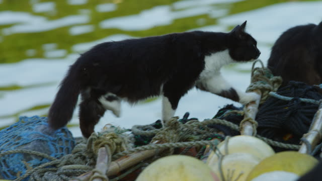 vídeos de stock, filmes e b-roll de ms feral domestic cat climbs over fish boxes and watches action - grupo mediano de animales