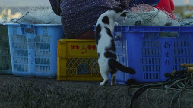vídeos y material grabado en eventos de stock de feral domestic cat climbs over fish boxes with fisher people action in background - cajón para embalar