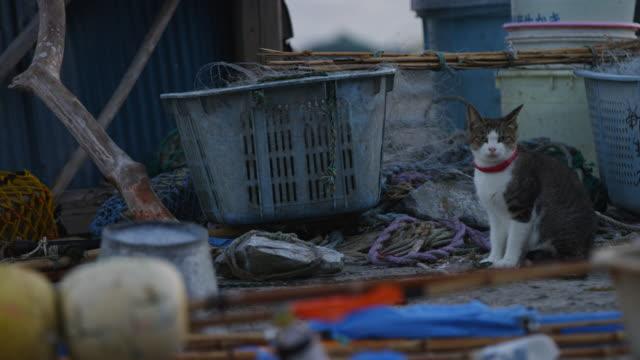 vídeos y material grabado en eventos de stock de feral domestic cat sits amongst fish boxes on dockside and looks around - vibrisas