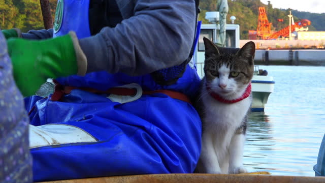 vídeos de stock e filmes b-roll de feral domestic cat sits close to fisherman on dockside and looks around - grupo mediano de animales
