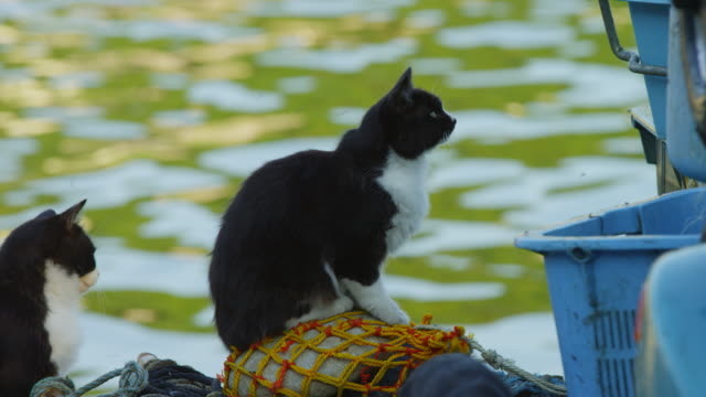 stockvideo's en b-roll-footage met ms feral domestic cat sits on fish boxes and watches action out of frame - kleine groep dieren