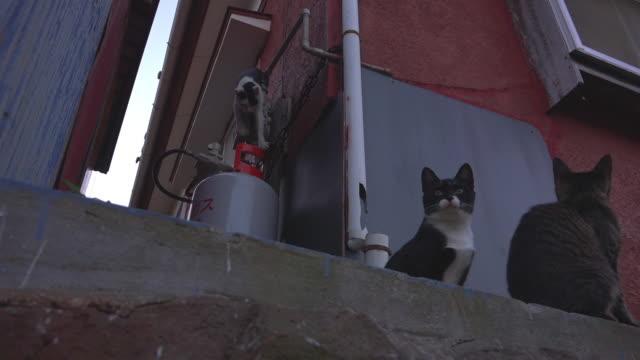 la feral domestic cat struggles to climb down gas pipe in alleyway - 迷子の動物点の映像素材/bロール
