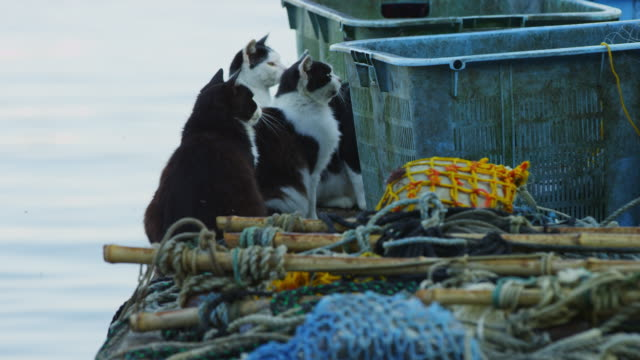 stockvideo's en b-roll-footage met feral domestic cats on dockside move away as fish box is pushed towards them - kleine groep dieren
