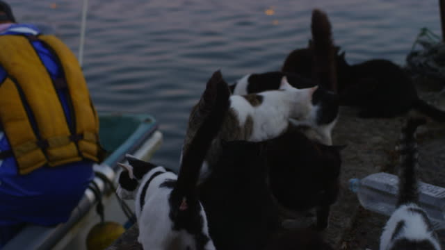 vidéos et rushes de feral domestic cats on dockside next to fishing boat watch fisherman in action - groupe d'animaux