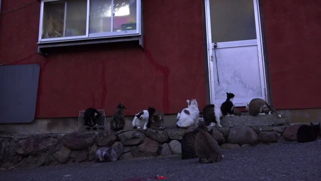 ws feral domestic cats wait outside house - katze stock-videos und b-roll-filmmaterial