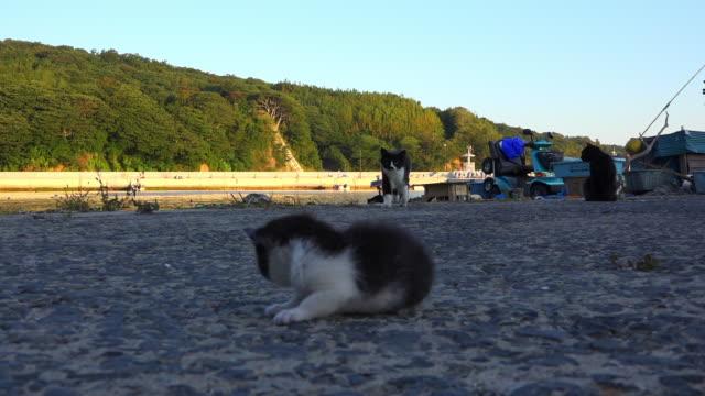vídeos de stock, filmes e b-roll de feral domestic kitten alone on dockside as cat walks up to it - grupo médio de animais