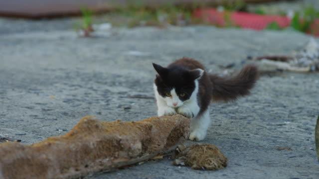 vídeos de stock, filmes e b-roll de feral domestic kitten sharpens claws on branch lying on roadside - bigode de animal