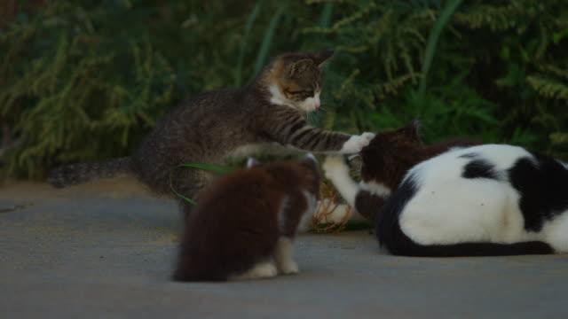 stockvideo's en b-roll-footage met feral domestic kittens play fight on roadside - kleine groep dieren