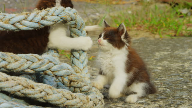 ms 2 feral domestic kittens play fighting around rope on concrete dockside - two animals stock videos & royalty-free footage