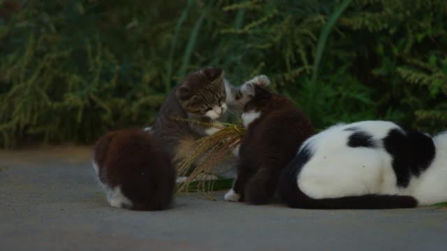 stockvideo's en b-roll-footage met feral domestic kittens play with plants on roadside - kleine groep dieren