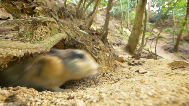 feral domestic rabbit runs out of burrow and sniffs at camera lens - creazione animale video stock e b–roll