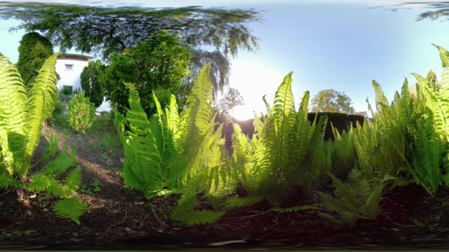 360 vr / fern against the sunlight in the garden - cyberspace stock videos & royalty-free footage