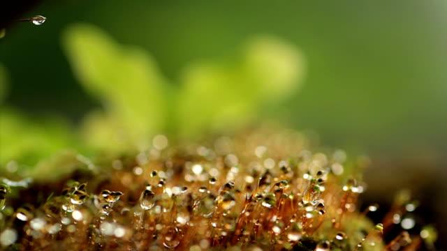 カンゾウと lichens - 葉状体点の映像素材/bロール