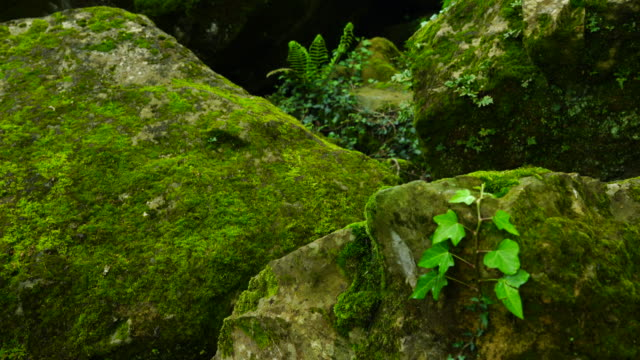 fern and moss in the forest - moss stock videos & royalty-free footage