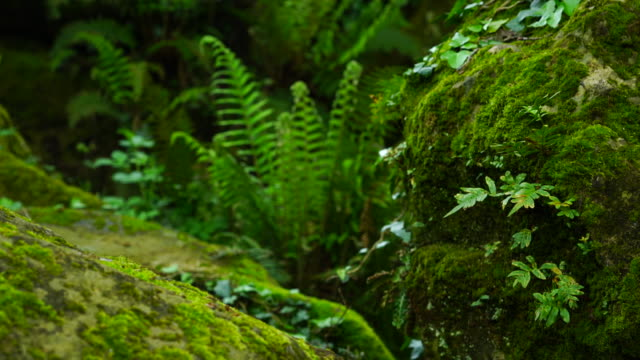 Fern and moss in the forest