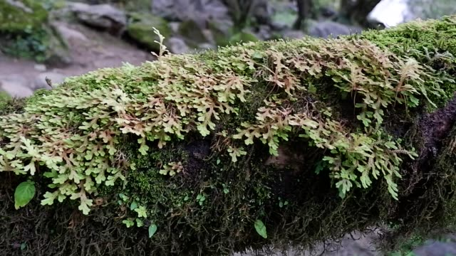 fern and moss on tree - tree fern stock videos & royalty-free footage