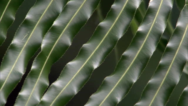 fern frond in forest, madagascar - frond stock videos & royalty-free footage