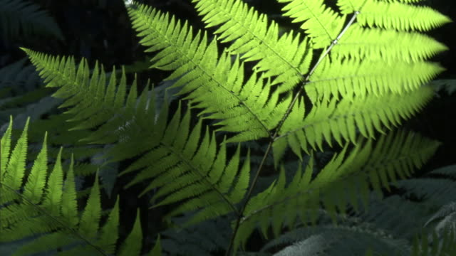 fern fronds sway in wind in forest, new caledonia - french overseas territory stock videos & royalty-free footage