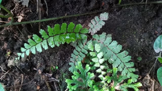 fern in forest - leaf vein stock videos and b-roll footage