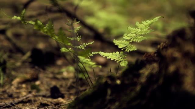 Fern im Wald