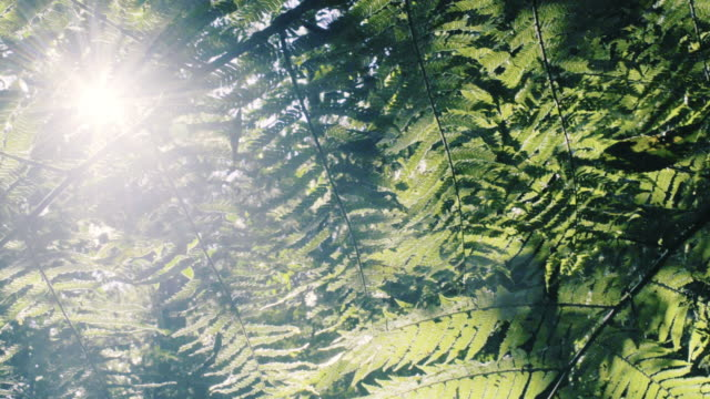 fern leaves in a rain forest - fern stock videos & royalty-free footage