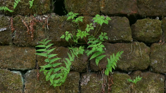 fern on old sandstone wall - sandstone stock videos and b-roll footage