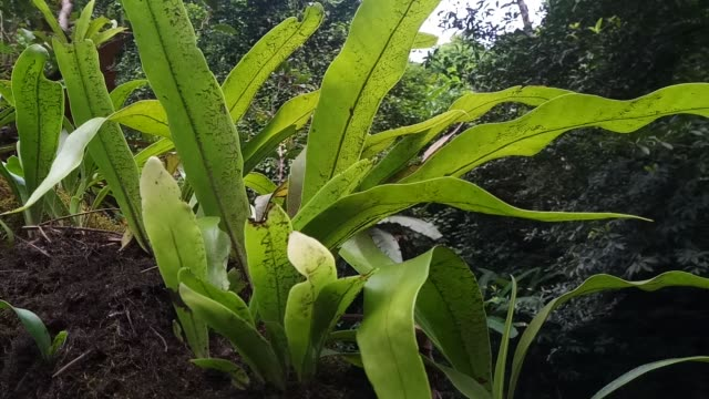 fern on tree - tree fern stock videos & royalty-free footage
