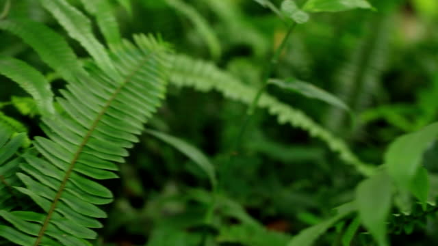 fern : rainforest - fern stock videos & royalty-free footage