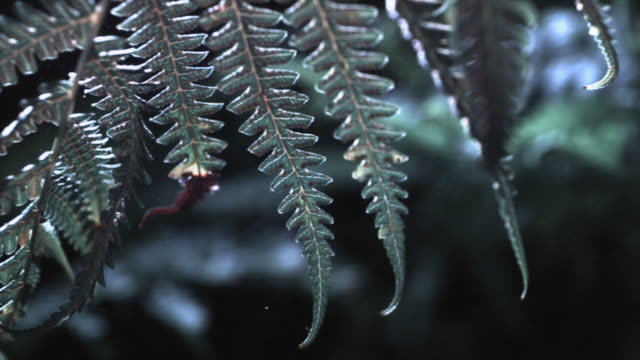 a fern releases spores in a gentle breeze. available in hd. - spore stock videos and b-roll footage