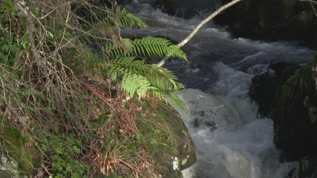 Farn, wiegen sich im Wind im ländlichen Dumfries und Galloway Südwesten Schottlands